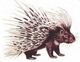 Porcupine[1]